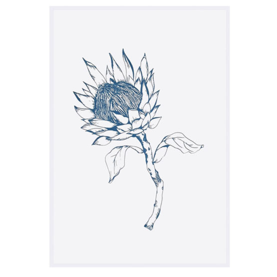 Protea-Blue-_5